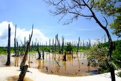 Versteinerter Wald lizenzfreies stockbild