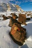 Versteinerter Wald im Winter Lizenzfreie Stockfotos