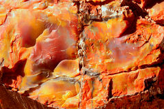 Versteinertes Holz Lizenzfreie Stockbilder