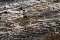 Versteinertes Holz Stockbilder