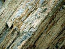 Versteinertes Holz Stockfotos