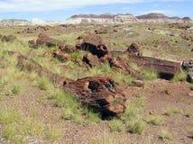 Versteinertes Holz bei versteinertem Forest National Park, Arizona, USA lizenzfreie stockfotografie