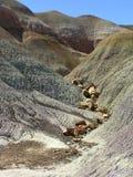 Versteinertes Holz bei versteinertem Forest National Park, Arizona, USA stockbilder