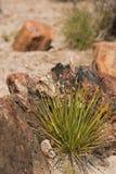 Versteinertes Holz, das nahe bei Wüstenpflanzen stillsteht Stockfoto