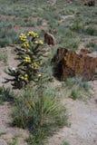Versteinertes Holz, das nahe bei Wüstenpflanzen stillsteht Lizenzfreie Stockfotografie