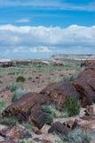 Versteinertes Holz, das nahe bei Wüstenpflanzen stillsteht Lizenzfreie Stockfotos