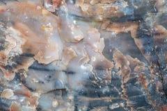 Versteinertes Holz lizenzfreie stockfotos