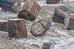 Versteinertes Holz herum gestreut am Nationalpark Stockfotos