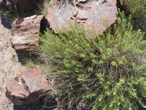 Versteinertes Holz und blühende Pflanze Lizenzfreie Stockfotografie