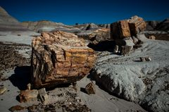 Verstijfd van angst Bos Beroemd punt op Route 66 royalty-vrije stock afbeelding