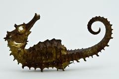 Verstijfd van angst zeepaardje Stock Afbeelding
