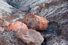 Verstijfde van angst boom Stock Foto