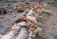 Verstijfde van angst boom Stock Afbeelding