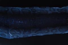 verstoßene Haut der Jacke Schlange königlicher Pythonschlange auf einem weißen Hintergrund Computerverarbeitung, Umstellung lizenzfreies stockbild