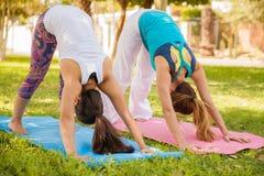 Versuchen einiger grundlegender Yogahaltungen Stockfotografie