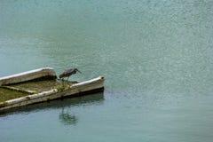 Versunkenes Fischerboot und ein Reihervogel Stockfoto