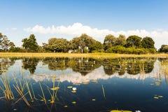 Översvämma tid i den Okavango deltan Arkivfoton