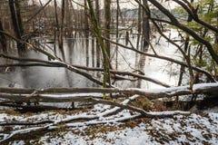 Översvämmade träd i vintertid Arkivfoton