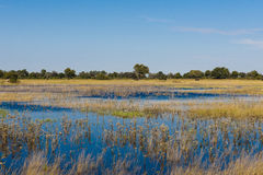 Översvämningstid i den Okavango deltan Royaltyfri Foto