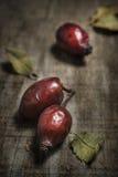 Vert плода шиповника Стоковое Изображение