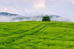Vert Image libre de droits