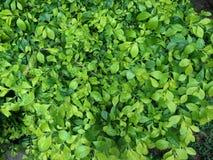 Vert Images stock