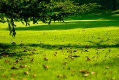 Vert ! Photos libres de droits