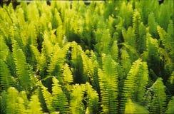 vert Images libres de droits