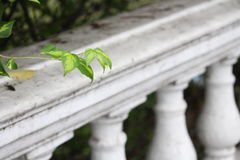 Vert photographie stock