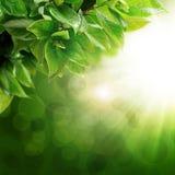 Vert abstrait de fond Photos stock