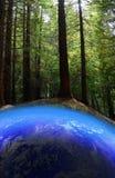 Vert allant de la terre Images libres de droits