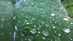Vert, avec des baisses transparentes ? Peut-être c'est pluie ? images libres de droits