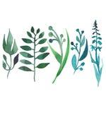 Vert clair croquis de main de l'aquarelle cinq d'isolement belle par herbe Photos libres de droits