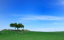 Vert classé Image libre de droits