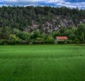 Vert croissant d'usines de champ d'agriculture photos stock