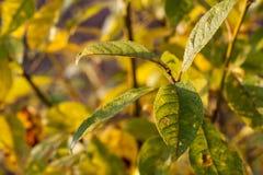 Vert détruit ou malade Photo libre de droits