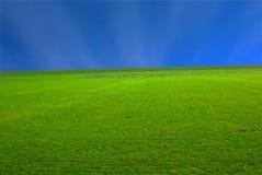 Vert d'été Image stock