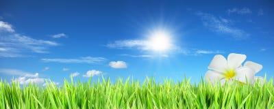 Vert d'été avec les fleurs blanches Images libres de droits