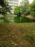 Vert d'étang Images stock
