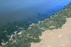 vert d'algues Images libres de droits