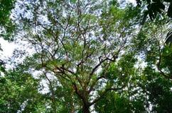 Vert d'arbre de fond, bois Images libres de droits