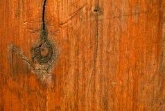 Vert d'arbre de fond, bois Photo libre de droits