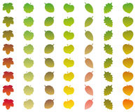 Vert d'automne de catégories de changement de couleur de feuilles Image stock