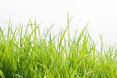 vert d'herbe photographie stock libre de droits