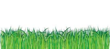 vert d'herbe illustration de vecteur