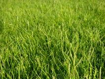 Vert d'herbe photos libres de droits