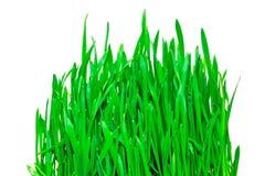 vert d'herbe Photographie stock
