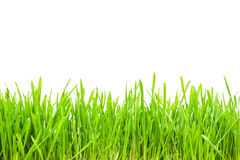 vert d'herbe Images libres de droits