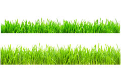 vert d'herbe photos stock