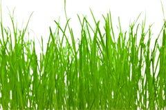 vert d'herbe de fond Photos libres de droits
